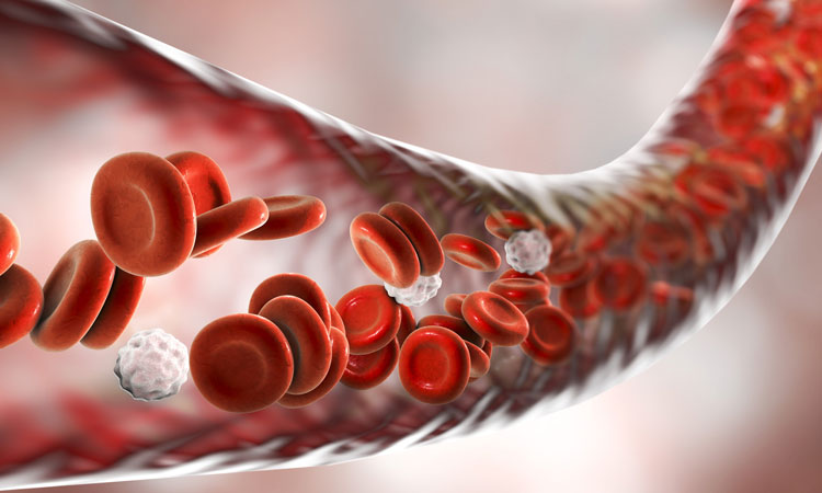 blood-cells-in-vein_for-web